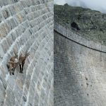 Goats, gravity and Spacetime
