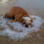 Harnessing the Chill – cooling processes